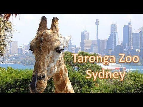 Taronga Zoo旅游 悉尼的动物乐园