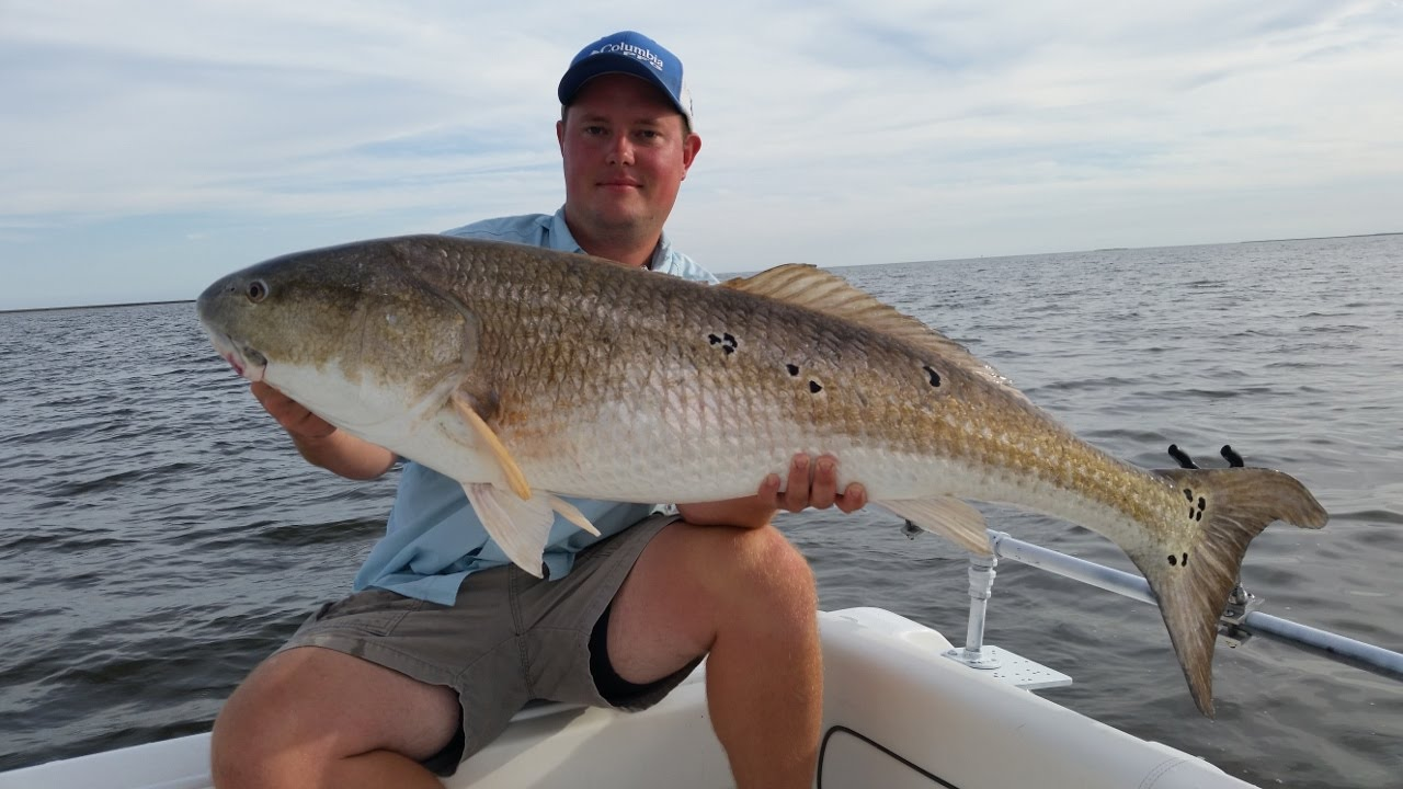 Giant bull red drum fishing on the pamlico sound youtube for What kind of fish do i have