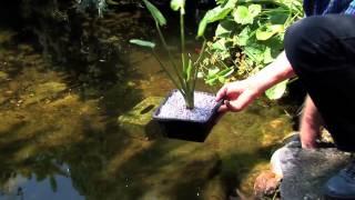 Den Teich pflegen