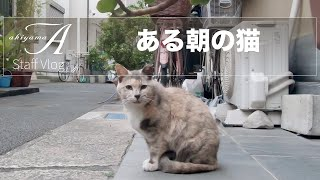 [Staff Vlog] ある朝の猫