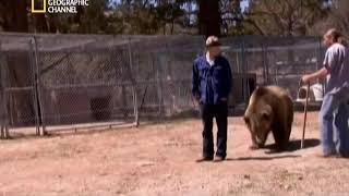 Медведь в деле
