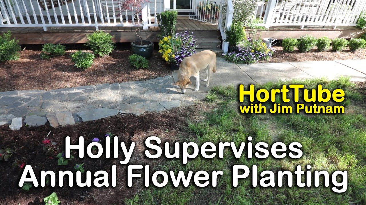 Planting some summer flowering annuals youtube planting some summer flowering annuals izmirmasajfo