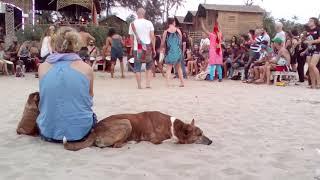 Собаки и пляжи северного Гоа