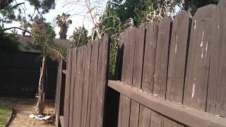 Fence Moving In Wind