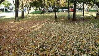 Andando nas Folhas do Outono - Quebec