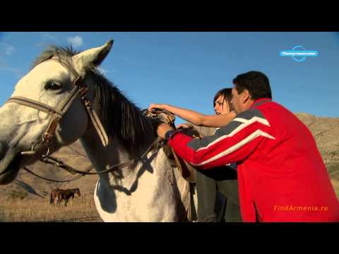 Кони Армении