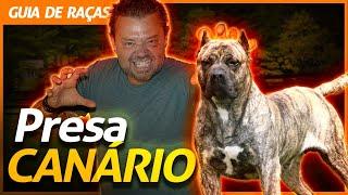 PRESA CANÁRIO, O MELHOR CÃO DE GUARDA! | RICHARD RASMUSSEN