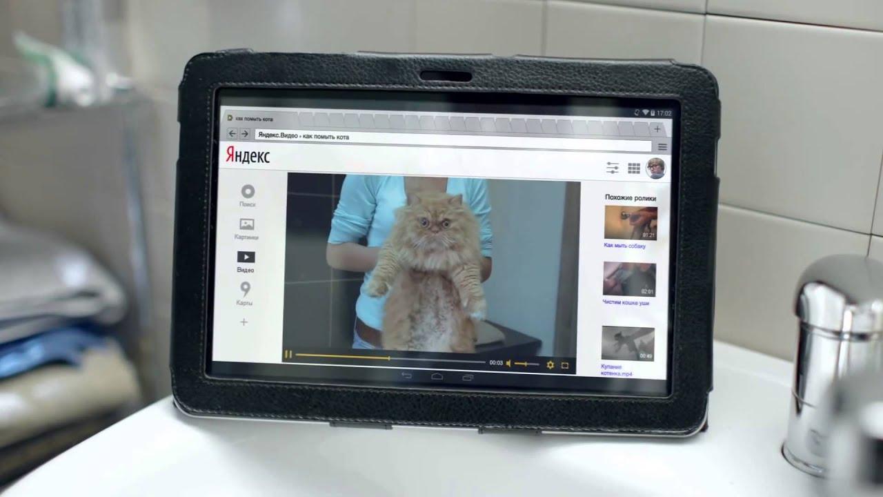 Кот с рекламы яндекс