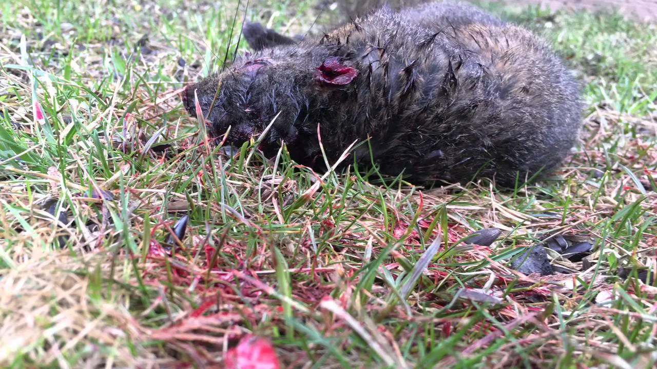 marauder backyard pest control 9 youtube