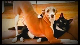 Animals valentine's day special | Funny moment