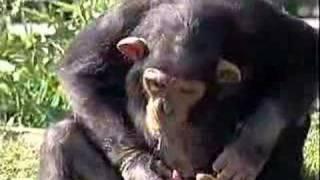 monkey-water