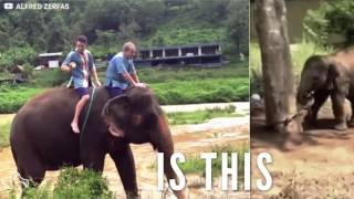 Baby Elephant Was Tied To A Tree And Separated From Her Mother