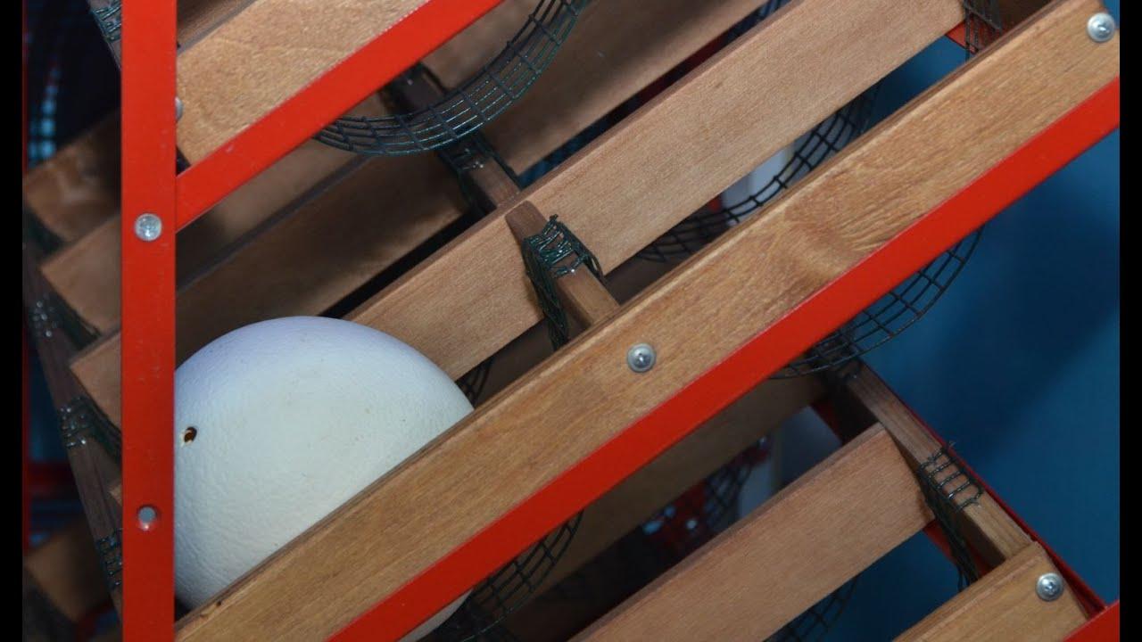 Инкубатор для страусиных яиц своими руками