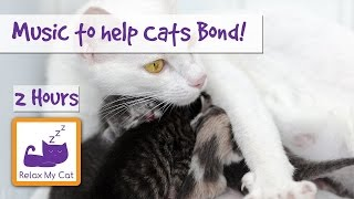 How to Help Cats Bond - Music for New Kittens - How to Introduce New Kittens to Older Cats