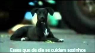 TODO CACHORRO MERECE UM LAR (COMERCIAL CHILENO DA PEDIGREE, LEGENDADO EM PORTUGUÊS)