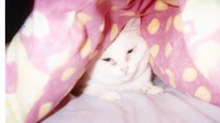 Mia Cat