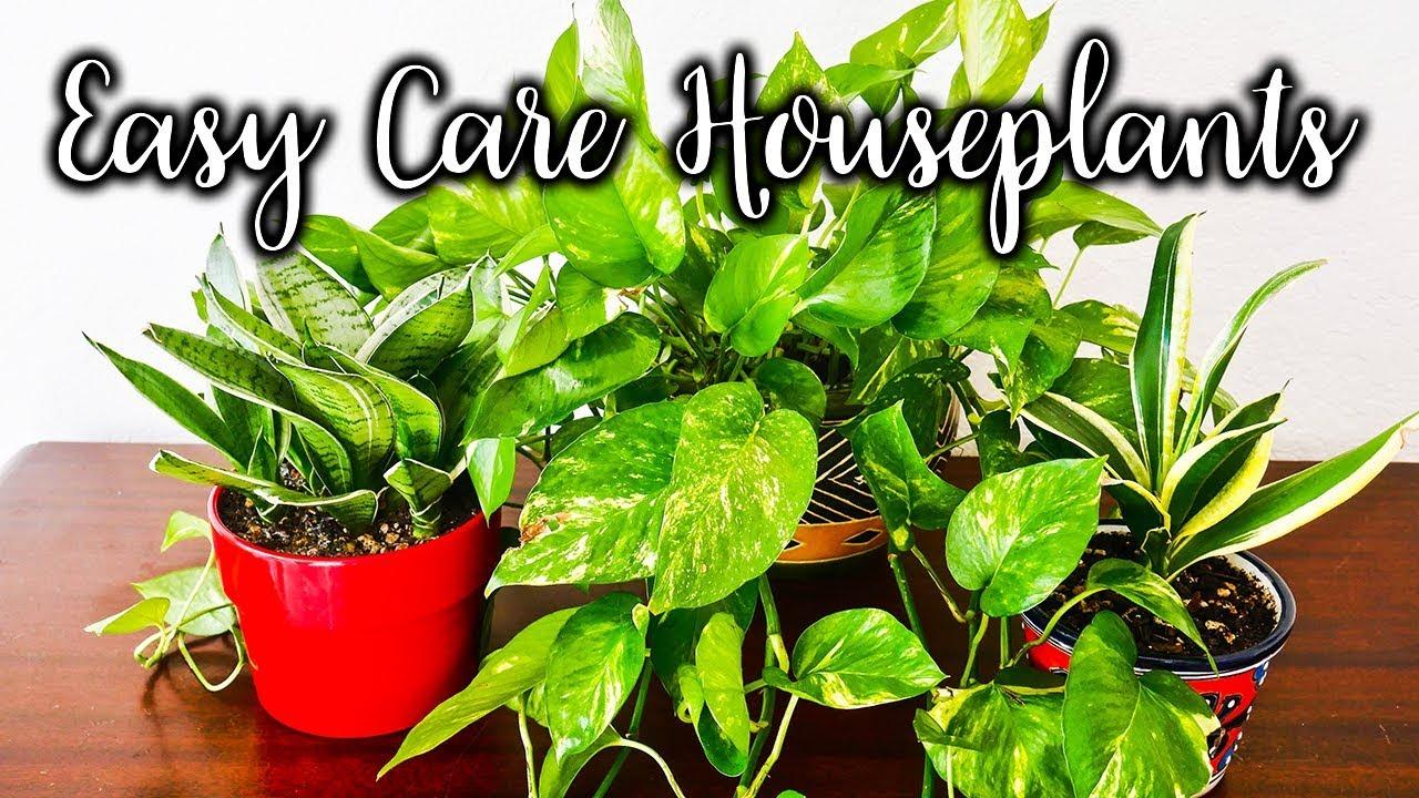 Genial 7 Easy Care Tabletop U0026 Hanging Plants For Beginning Houseplant Gardeners  /Joy Us Garden