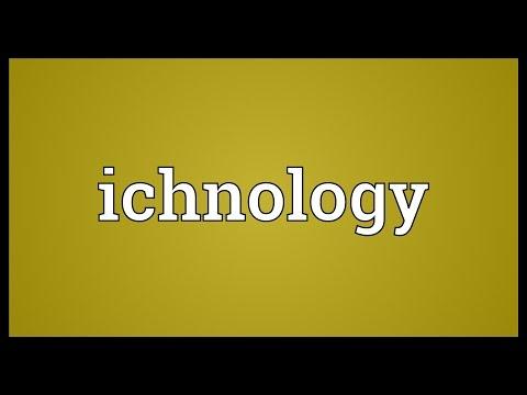Header of ichnology
