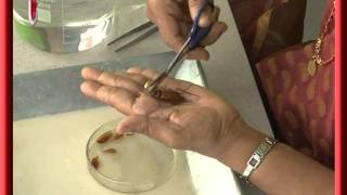 Video Cockroach Dissection download MP3, 3GP, MP4, WEBM, AVI, FLV Mei 2018
