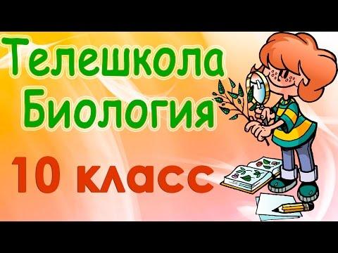 Решебник По Биологии Котик Таглина 10 Класс phonestatistic