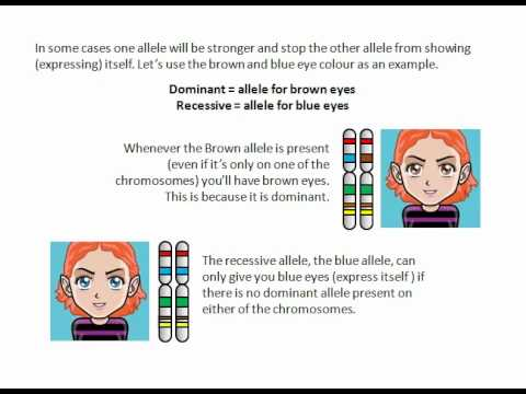 Dominant and Recessive traits - YouTube