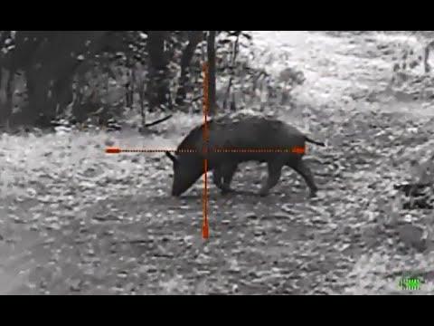 Loner Pig  Photon XT and Barnes 62 TTSX