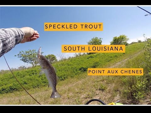 Bank Fishing South Louisiana Point Aux Chenes. This Bayou Was Thick With Speckled Trout