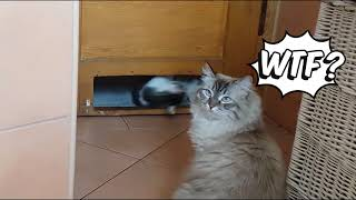 WFT funny cat OMG