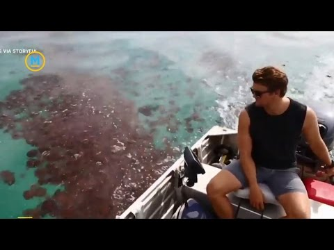 Video Captures Thousands Of Red Jellyfish In Australia | Your Morning