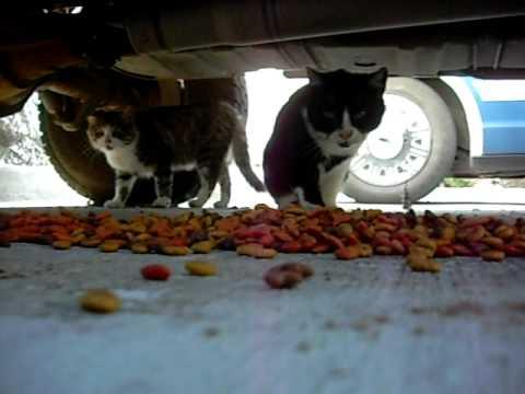 Stray Cats Site Youtube Com