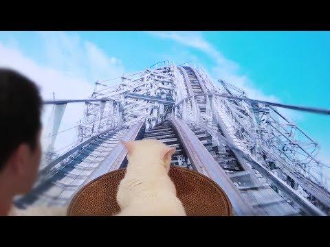 고양이가 롤러코스터를 탔어요! 😎