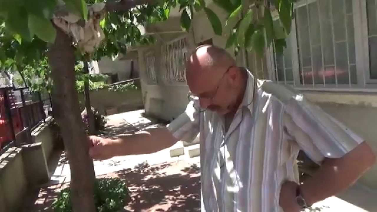 Elma bahçesi - iş mi hobi mi