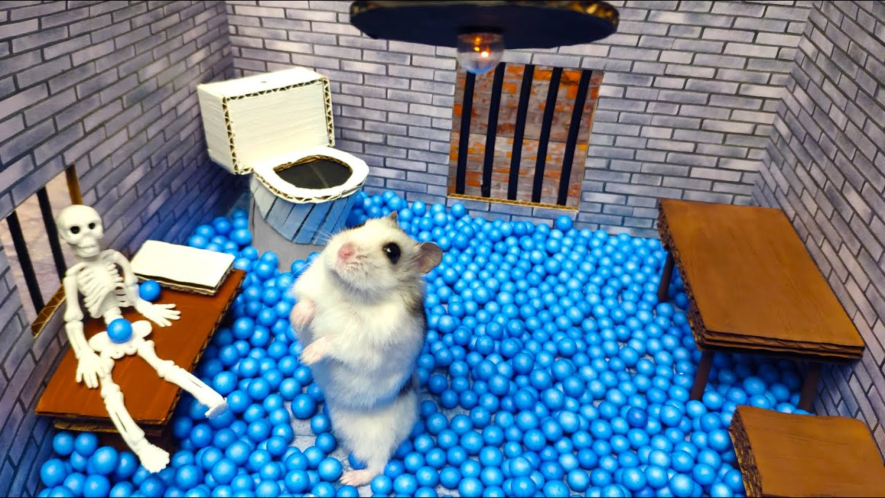 🐹Hamster escapes the awesome maze for Pets in real life 🐹 in Hamster stories Part 3