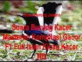 Suara Burung Kacer Masteran Kompilasi Gacor F Full Isian Kicau Kacer Hd  Mp3 - Mp4 Download