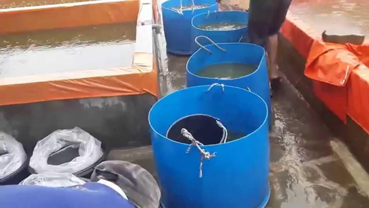 Download [SANGKUTI FARM] Panen & packing benih uk. 9-10