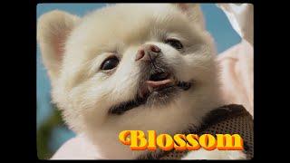 [MV] 루도얼 (RUDE ORE) - BLOSSOM …