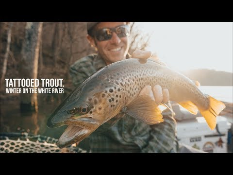 Ozarks On The Fly | VOL3 | WINTER FLY FISHING On The WHITE RIVER