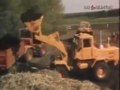 Технология выращивания огурцов в теплице (видео)