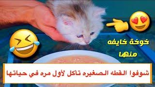 القطه الصغيره بنت لوسي تأكل لأول مره في حياتها 😍 الفيديو صار ASMR 😂/ Mohamed Vlog