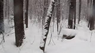 Зимний лес клип