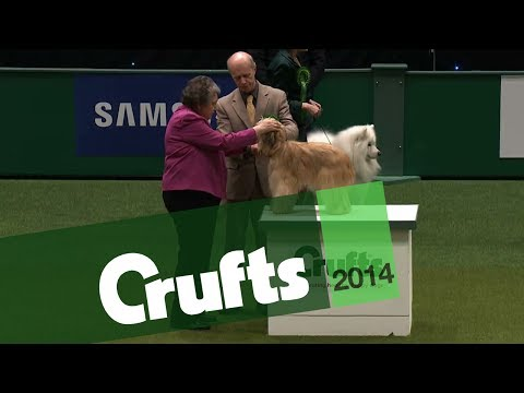 Group Judging | Pastoral Group | Crufts 2014