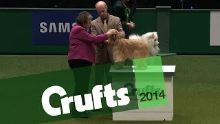 Group Judging   Pastoral Group   Crufts 2014