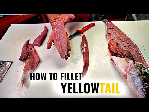 How To Fillet Yellowtail | Tommy Gomes
