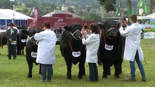 Grŵp o 3 Biff Cynhenid   Native Beef Breeds Group of 3