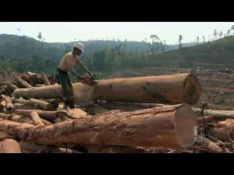 Dokumentari Penghancuran Hutan di Riau