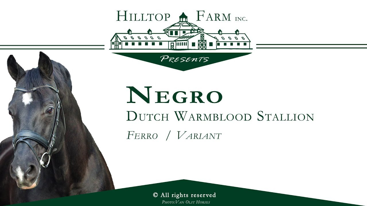 Select Breeders Services - Negro