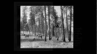 Contempla 88 años de evolución de un pinar en unos minutos.