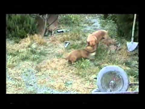 Cani gatti e galline che giocano youtube for Youtube cani e gatti