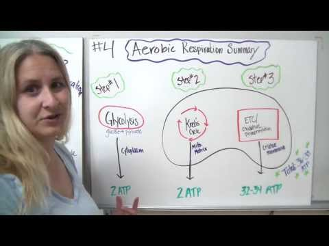 Energy production summary of aerobic respiration