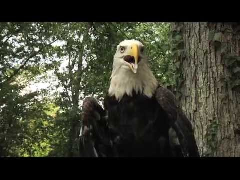 Ranger Nick: Bald Eagles